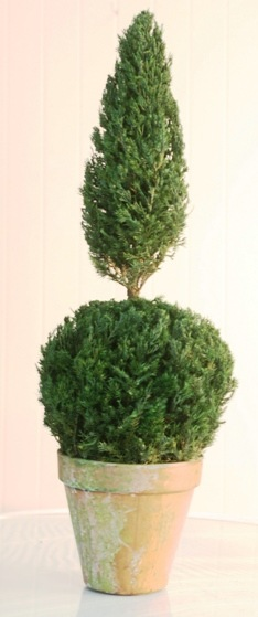 Preserved Ball Cone Topiary 20 inch in Juniper Foliage